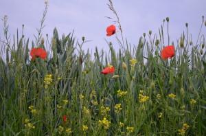 photo : http://www.millevie.org/